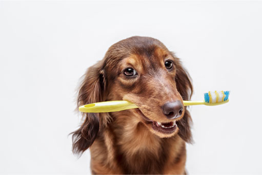 Dog with a tooth brush in its mouth